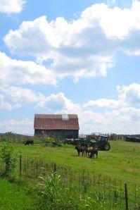 Arkansas farmland