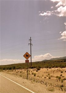 The dancing cow of Nevada's open range signs